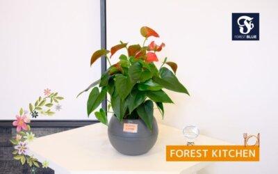 FOREST BLUE内に展示しているお花・観葉植物はご購入いただけます。