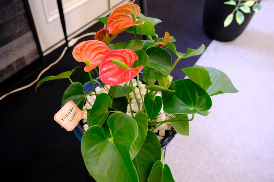 FOREST BLUE内に展示しているお花・観葉植物はご購入いただけます。 fb flower shop5127