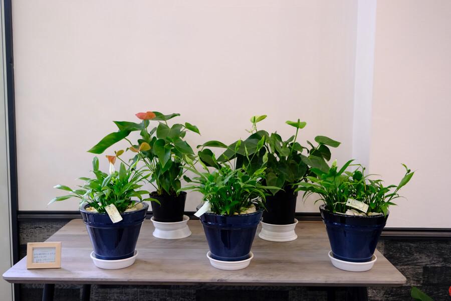 FOREST BLUE内に展示しているお花・観葉植物はご購入いただけます。 fb flower shop5149
