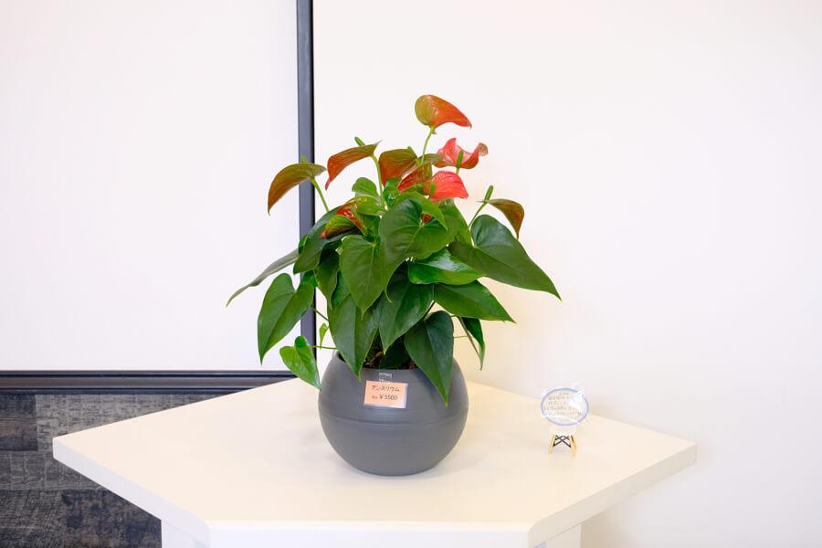 FOREST BLUE内に展示しているお花・観葉植物はご購入いただけます。 fb flower shop5159